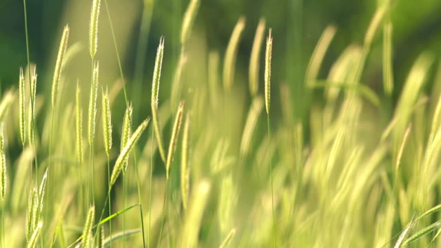 Blurred grass with green field and mountain background, HDR shot