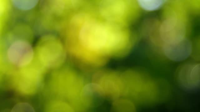 blurred green leaves bokeh nature