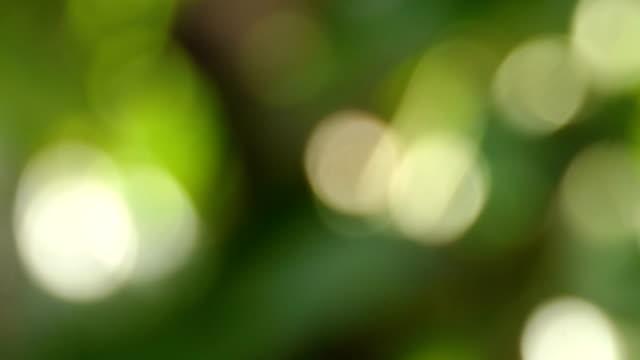 vidéos et rushes de feuilles vert bokeh nature floue - nervure
