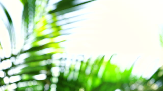 blurred of tropical palm leaves on white background