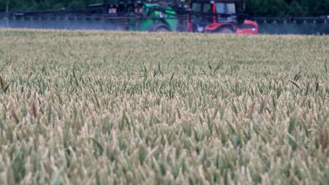 vidéos et rushes de brouillé tracteur spray blé seigle champ d'oreille avec des produits chimiques - herbicide