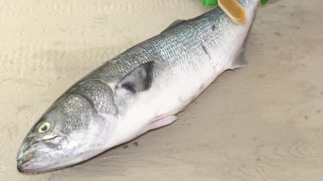 blyufish fish cleaning fish on the Cleaning scales of ide with a special serrated knife video