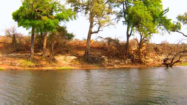 Boat cruise and wildlife safari on Chobe River, Namibia Botswana border, Africa Boat cruise and wildlife safari on Chobe River, Namibia Botswana border, Africa namibia stock videos & royalty-free footage