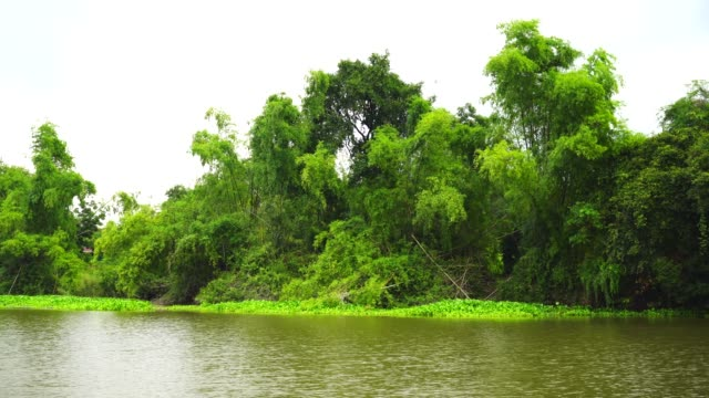Boat moving on the river with tree plant