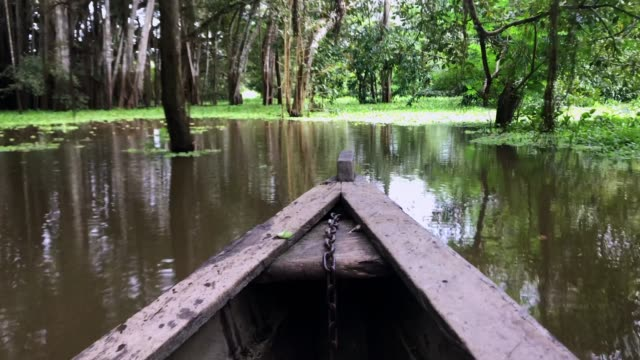 A boat ride through Amazon river, passing green leaves at surface and trees