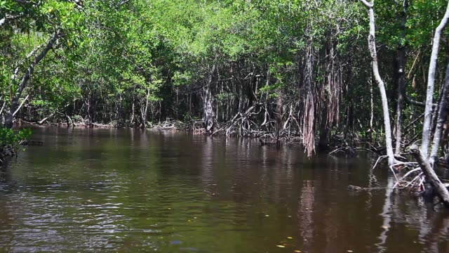 Boat ride through the Everglades and Mangroves. video