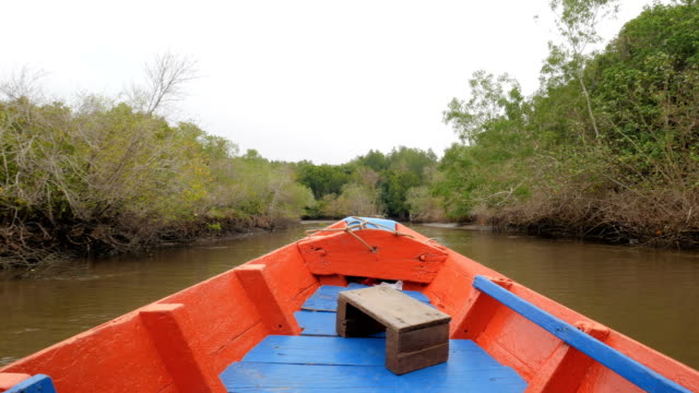 Boat view moving forward nearly mangrove forest at the river estuary the conserve sea nature environment video