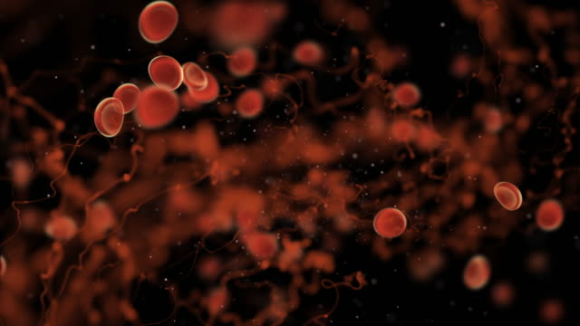 Body health science bacteria, virus and Red infecting blood cells travel in humen body vein. Biology virus infection blood cell and immune concept 3D rendering Body health science bacteria, virus and Red infecting blood cells travel in humen body vein. Biology virus infection blood cell and immune concept 3D rendering blood vessel stock videos & royalty-free footage