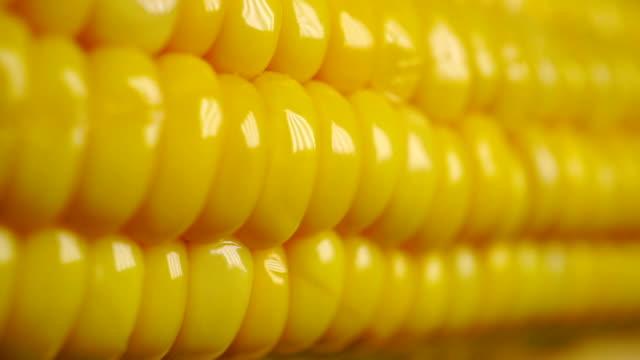 kokt majs cob dolly shot - skalhylsa bildbanksvideor och videomaterial från bakom kulisserna