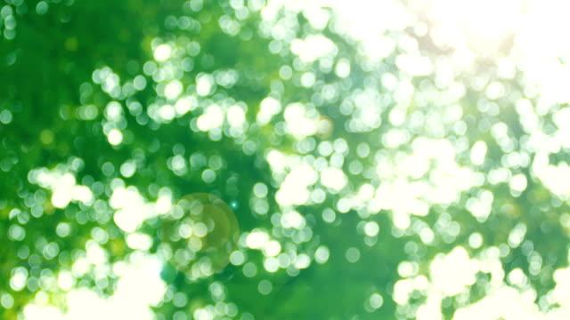 Bokeh in sunny forest Bokeh in sunny forest light through trees stock videos & royalty-free footage