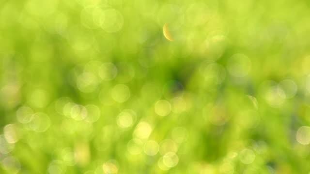 HD DOLLY: Bokeh Morning Meadow video