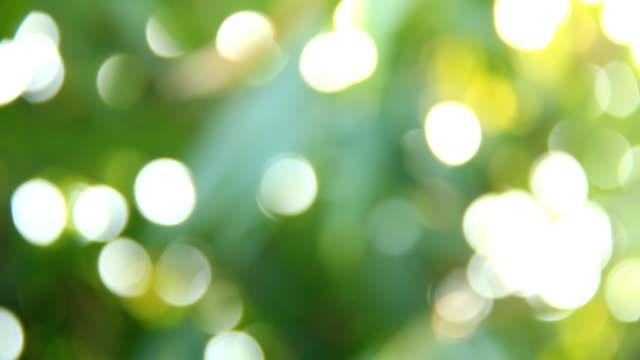 Bokeh of blurred tree leaves with sunlight