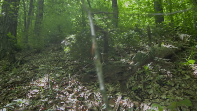 Bole in Forest video