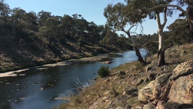 bombala platypus river i victoria australien - platypus bildbanksvideor och videomaterial från bakom kulisserna