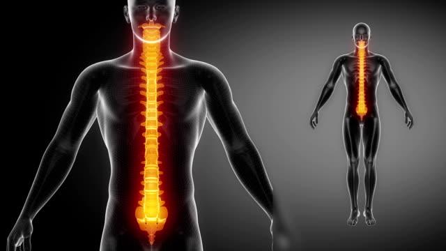 vídeos y material grabado en eventos de stock de esqueleto radiografía de la columna vertebral de la exploración en negro - espalda partes del cuerpo