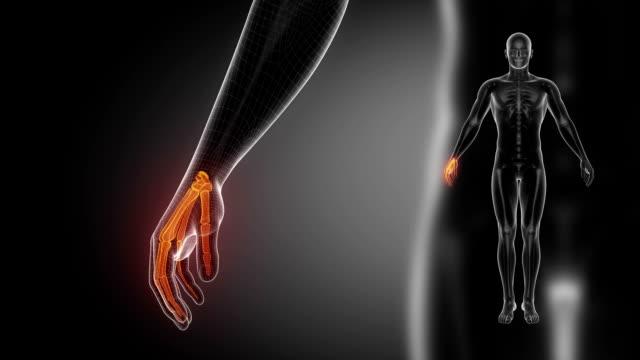 WRIST bone skeleton x-ray scan in black video
