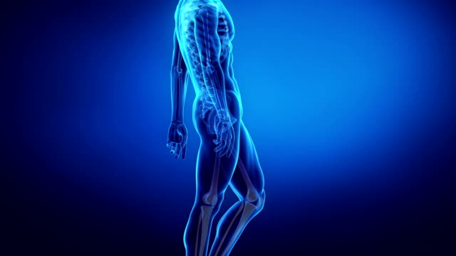 bone skeleton x-ray scan in blue LEG and knee video