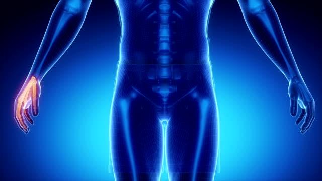 wrist bone skeleton x-ray scan in blue - axel led bildbanksvideor och videomaterial från bakom kulisserna