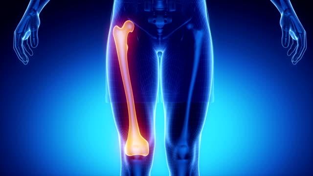 FEMUR bone skeleton x-ray scan in blue video
