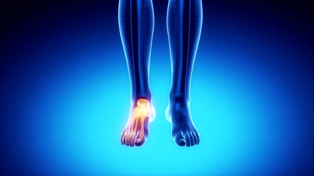 ANKLE  bone skeleton x-ray scan in blue Anatomy 3D concept ankle stock videos & royalty-free footage