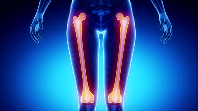 FEMUR bone skeleton x-ray scan in blue 3D anatomy concept ankle stock videos & royalty-free footage