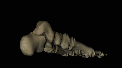 knochen des menschlichen fußes in rotation über schwarzem hintergrund - gliedmaßen körperteile stock-videos und b-roll-filmmaterial