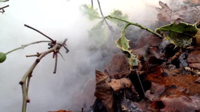Bonfire In The Garden video