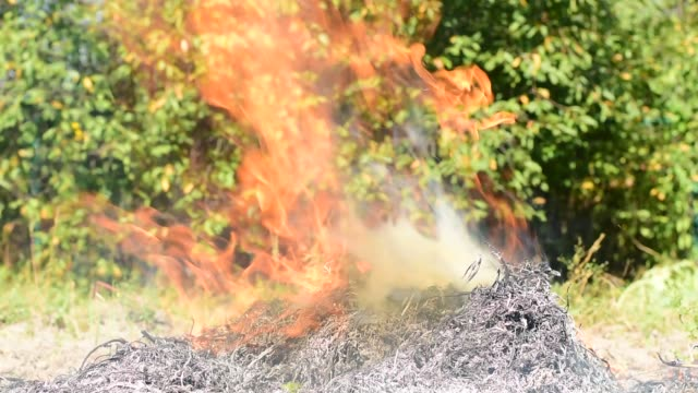 A bonfire is burning from dry branches and grass. Flames burst from the fire, burning branches of the fire. heap stock videos & royalty-free footage