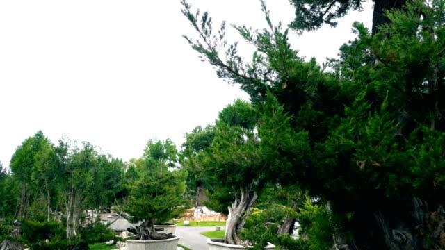 Bonsai in chinese garden,Xi'an,China.