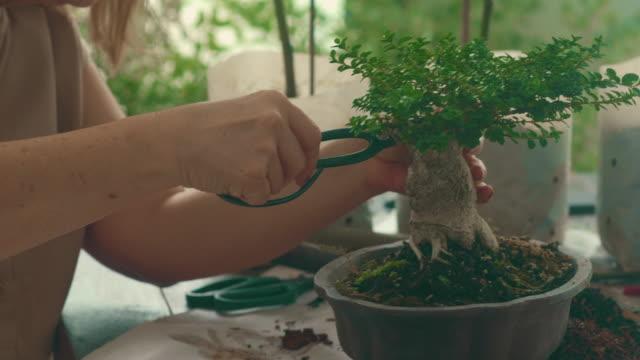 Bonsai Tree Activity