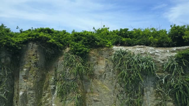 vídeos de stock, filmes e b-roll de peitos na ilha cliffside panamá - atobá