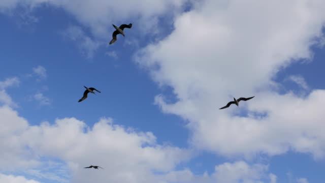 vídeos de stock, filmes e b-roll de atobá aves marinhas no méxico - atobá