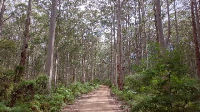 カリの木の森でボラナップ ドライブ - オーストラリア点の映像素材/bロール