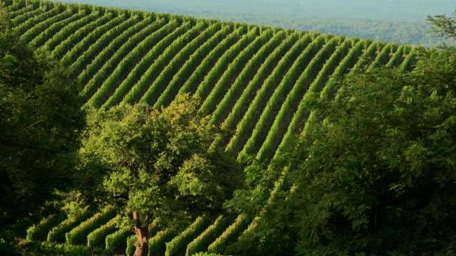 Bordeaux vineyard, landscape vineyard south west of france