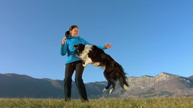 border collie jumping into arms - border collie video stock e b–roll