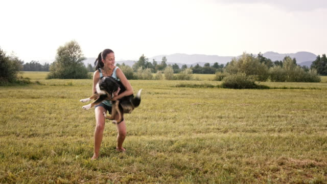 slo mo border collie jumping into his owner's arms - border collie video stock e b–roll