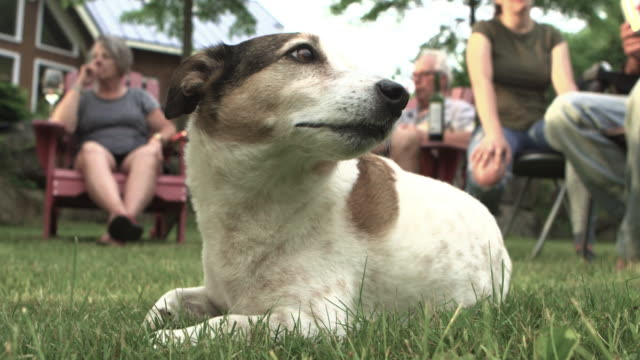 Perro aburrido en familia gran fiesta al aire libre - vídeo