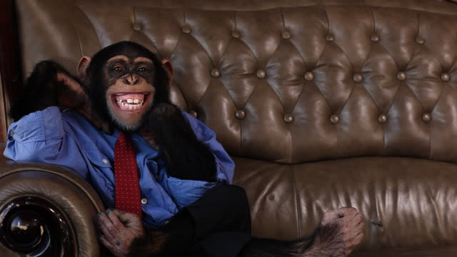 stockvideo's en b-roll-footage met boss chimp big smile - mensaap