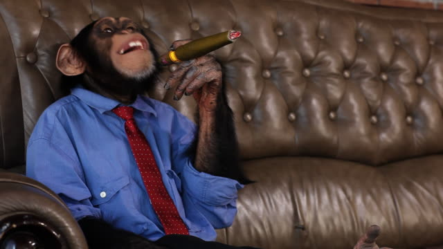 Boss Chimp Smoking Cigar
