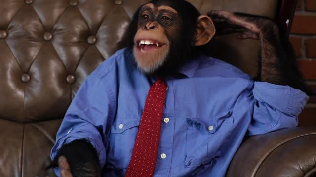 Refuerzo Chimp - vídeo