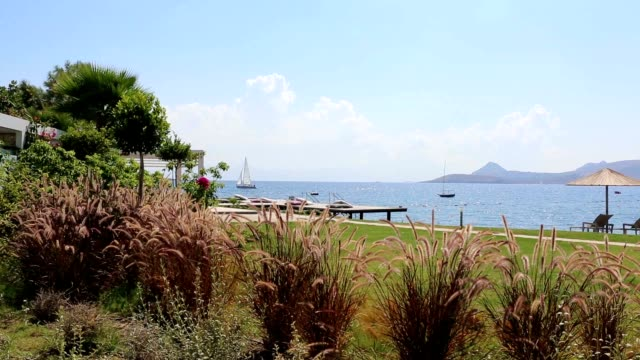 Botanic Garden with nice Flowers and Sea at Background Botanic Garden with nice Flowers and Sea at Background funchal stock videos & royalty-free footage