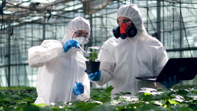 vidéos et rushes de les botanistes versent le liquide dans un pot avec une plante dans une serre. - herbicide
