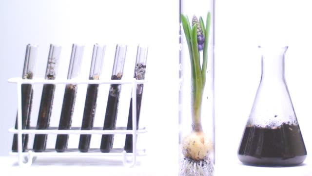 Botany laboratory over white background video