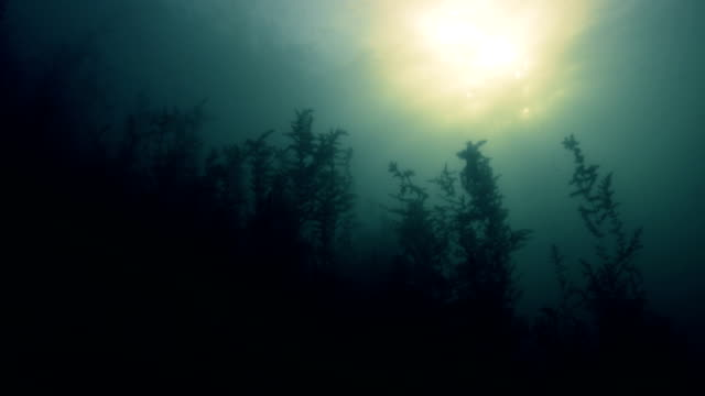 Bottom of a Fresh Water River with Sunlight and Algae video