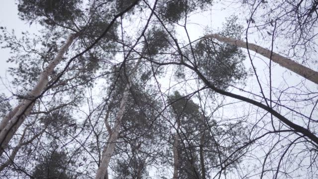 untere ansicht der baumkronen im hintergrund des grauen herbstwolkenhimmels. natur, kalte temperatur, flora. - laub winter stock-videos und b-roll-filmmaterial
