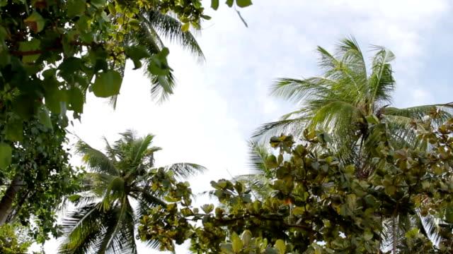 underifrån på palm trädgrenar vajande i vinden. phuket island, thailand - städsegrön växt bildbanksvideor och videomaterial från bakom kulisserna