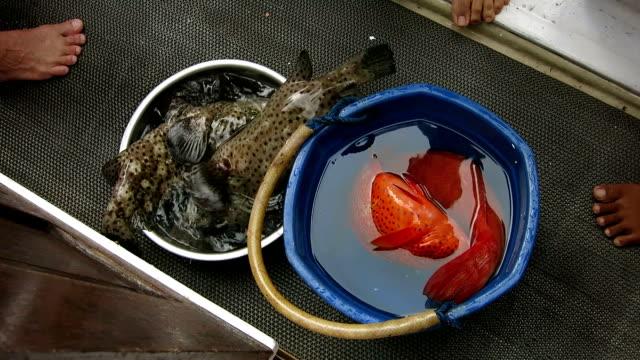 vídeos de stock e filmes b-roll de comprar peixes de fishmonger no mercado tradicional - fishman