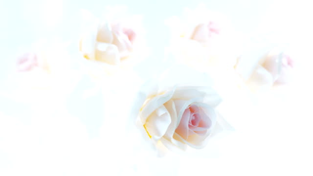 Bouquet of artificial roses video