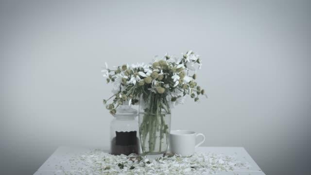 bukett av vackra prästkragar står i glasvas på matbord, som visar förtvinar av livet, vit bakgrund. acceleration av flödet av tid på exempel på blommor - coffe with death bildbanksvideor och videomaterial från bakom kulisserna