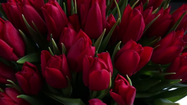 bouquet of beautiful red rose buds - rosa rossa video stock e b–roll